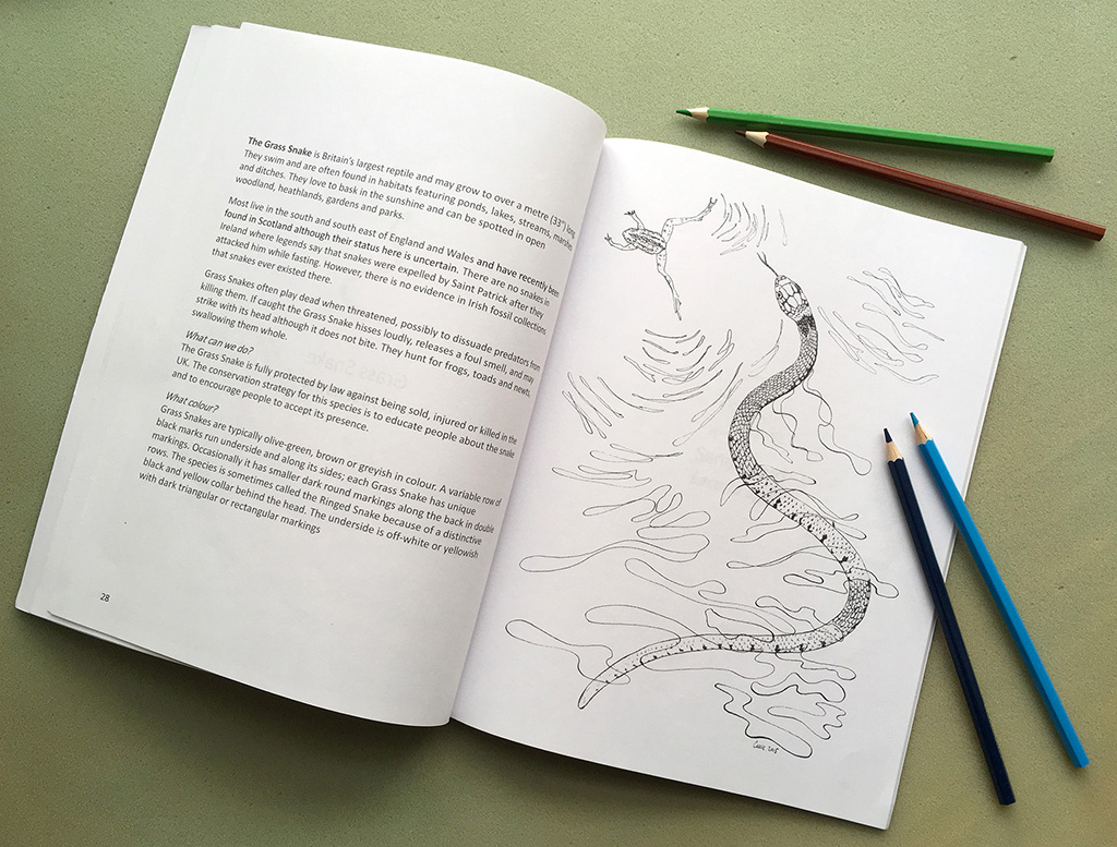 Grass Snake colouring page