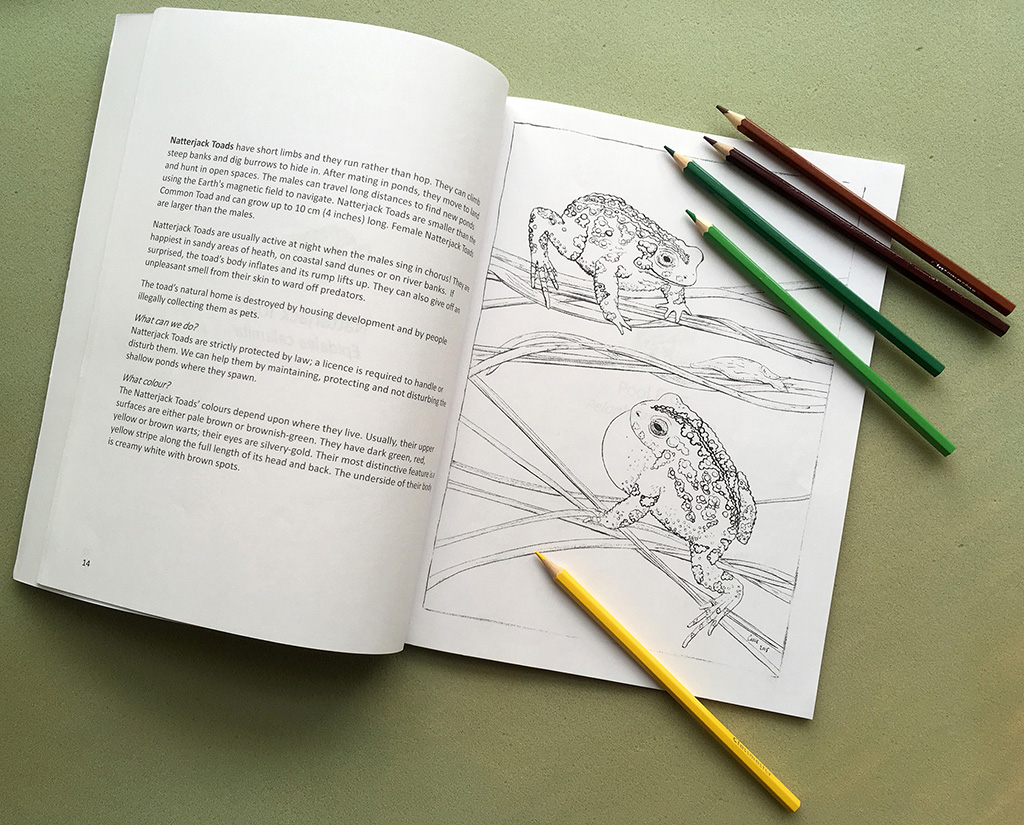 Natterjack Toad colouring page