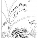 Black ink image; frogs leap to catch mayfly