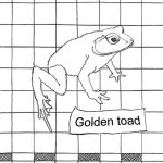Ink detail of a Golden Toad on square grid